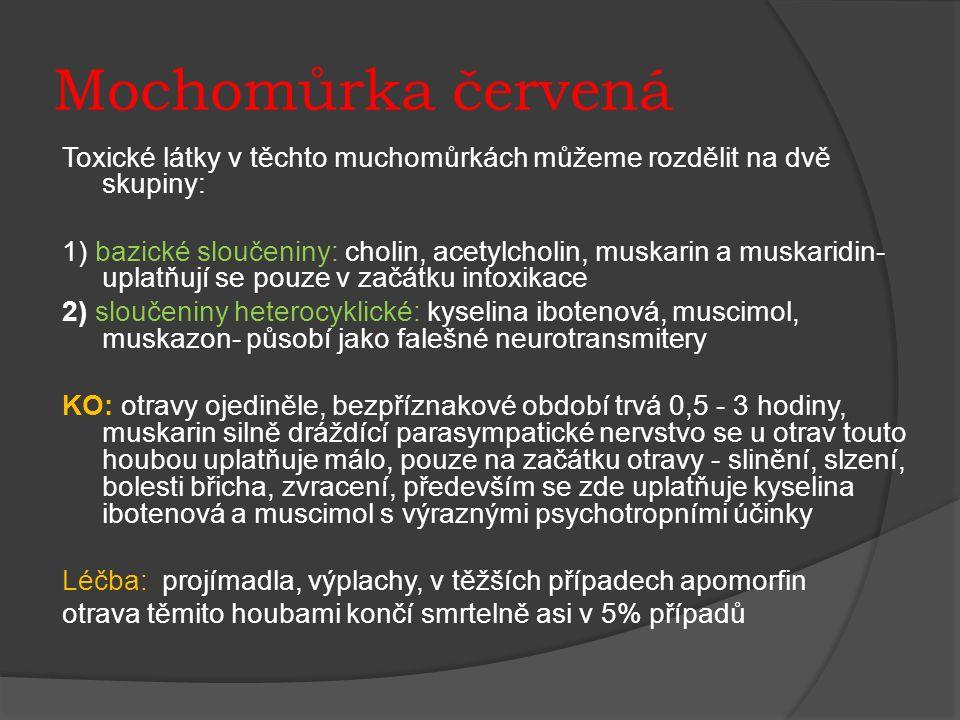 Mochomůrka červená Toxické látky v těchto muchomůrkách můžeme rozdělit na dvě skupiny: 1) bazické sloučeniny: cholin, acetylcholin, muskarin a muskaridin- uplatňují se pouze v začátku intoxikace 2) sloučeniny heterocyklické: kyselina ibotenová, muscimol, muskazon- působí jako falešné neurotransmitery KO: otravy ojediněle, bezpříznakové období trvá 0,5 - 3 hodiny, muskarin silně dráždící parasympatické nervstvo se u otrav touto houbou uplatňuje málo, pouze na začátku otravy - slinění, slzení, bolesti břicha, zvracení, především se zde uplatňuje kyselina ibotenová a muscimol s výraznými psychotropními účinky Léčba: projímadla, výplachy, v těžších případech apomorfin otrava těmito houbami končí smrtelně asi v 5% případů