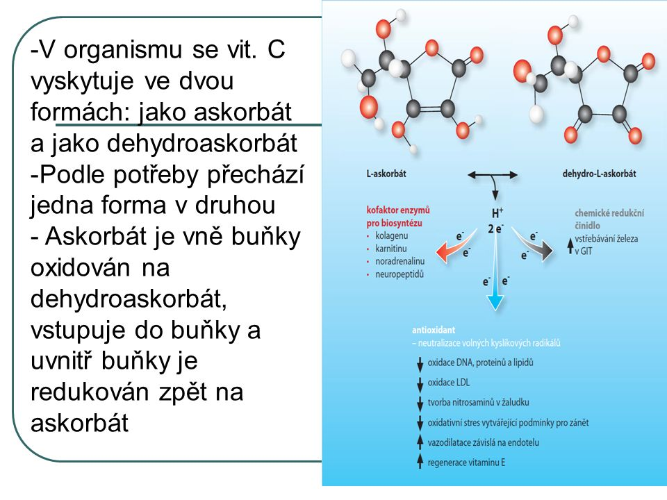 -V organismu se vit. C vyskytuje ve dvou formách: jako askorbát a jako dehydroaskorbát -Podle potřeby přechází jedna forma v druhou - Askorbát je vně