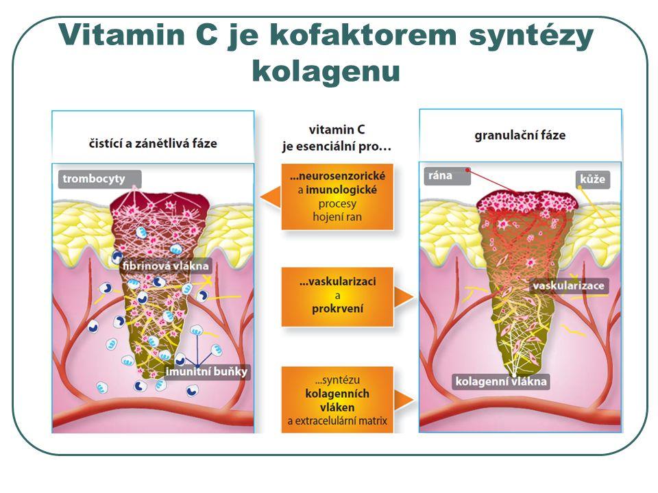 Vitamin C je kofaktorem syntézy kolagenu