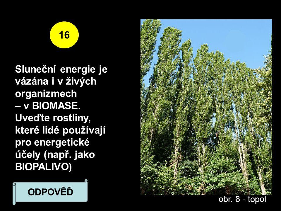 16 Sluneční energie je vázána i v živých organizmech – v BIOMASE.