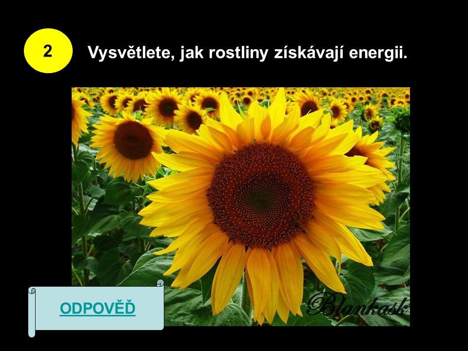 2 Vysvětlete, jak rostliny získávají energii. ODPOVĚĎ