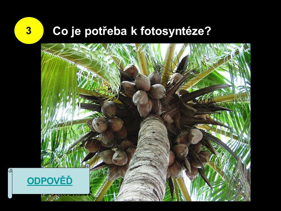 3 Co je potřeba k fotosyntéze ODPOVĚĎ