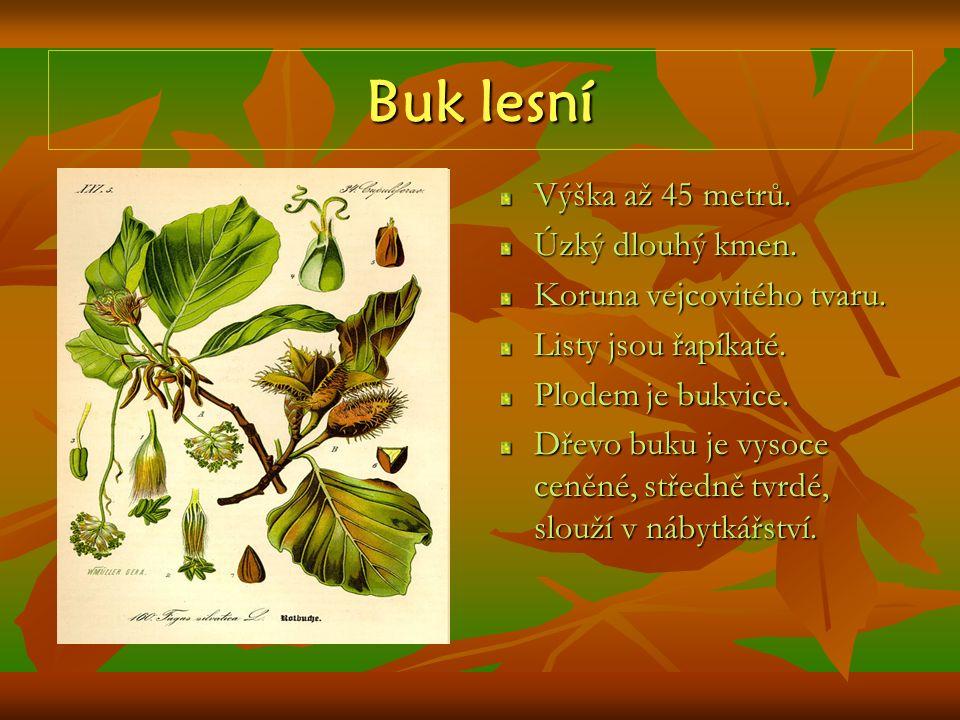 Olše lepkavá Strom vysoký až 30 m.Listy jsou střídavé, řapíkaté, okrouhlé.