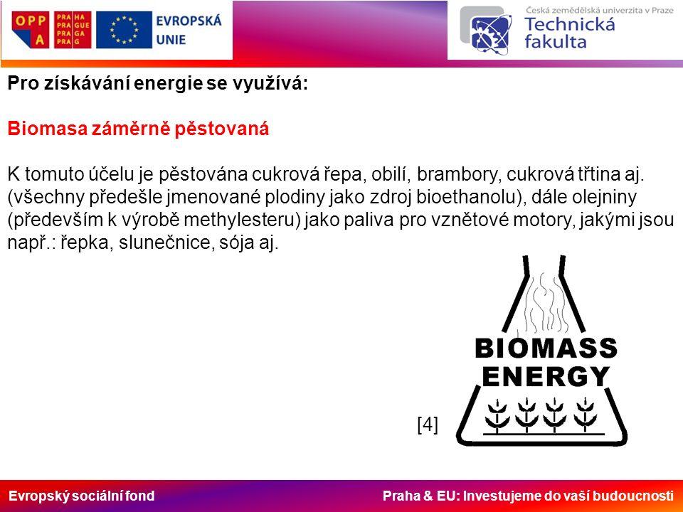 Evropský sociální fond Praha & EU: Investujeme do vaší budoucnosti Pro získávání energie se využívá: Biomasa záměrně pěstovaná K tomuto účelu je pěsto