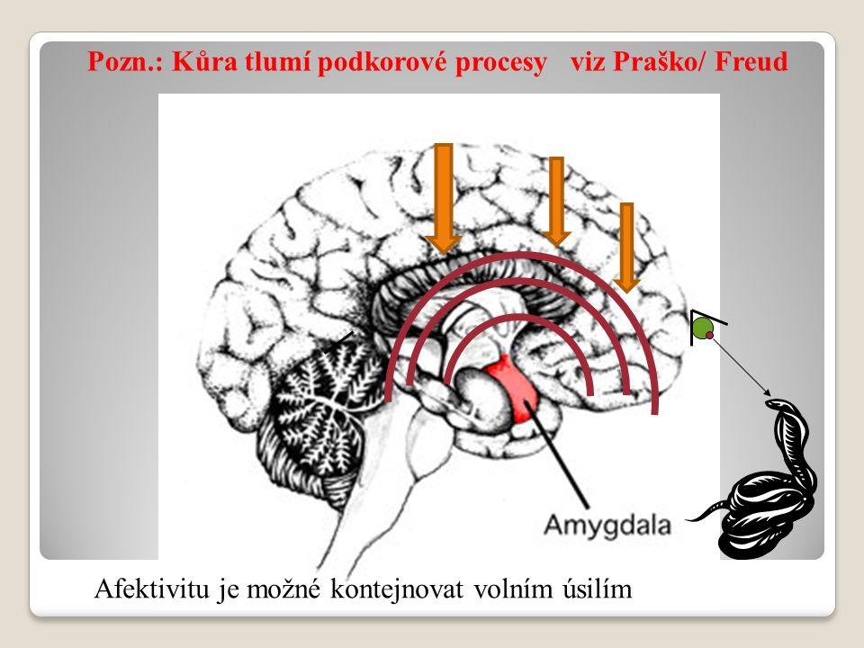 Pozn.: Kůra tlumí podkorové procesy viz Praško/ Freud Afektivitu je možné kontejnovat volním úsilím