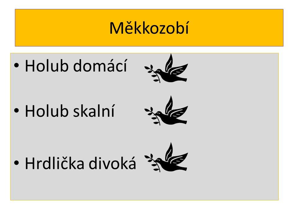 Měkkozobí Holub domácí Holub skalní Hrdlička divoká
