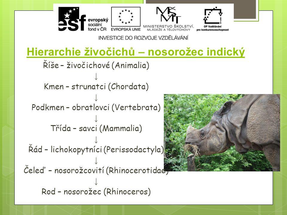 Hierarchie živočichů – nosorožec indický Říše – živočichové (Animalia) ↓ Kmen – strunatci (Chordata) ↓ Podkmen – obratlovci (Vertebrata) ↓ Třída – savci (Mammalia) ↓ Řád – lichokopytníci (Perissodactyla) ↓ Čeleď – nosorožcovití (Rhinocerotidae) ↓ Rod – nosorožec (Rhinoceros)