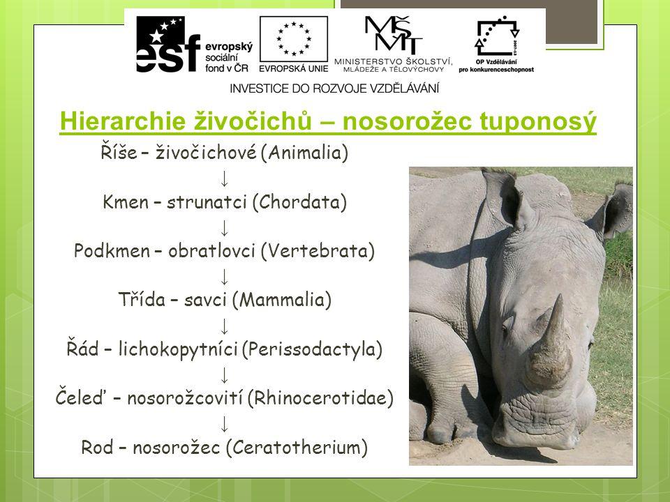 Hierarchie živočichů – nosorožec tuponosý Říše – živočichové (Animalia) ↓ Kmen – strunatci (Chordata) ↓ Podkmen – obratlovci (Vertebrata) ↓ Třída – savci (Mammalia) ↓ Řád – lichokopytníci (Perissodactyla) ↓ Čeleď – nosorožcovití (Rhinocerotidae) ↓ Rod – nosorožec (Ceratotherium)