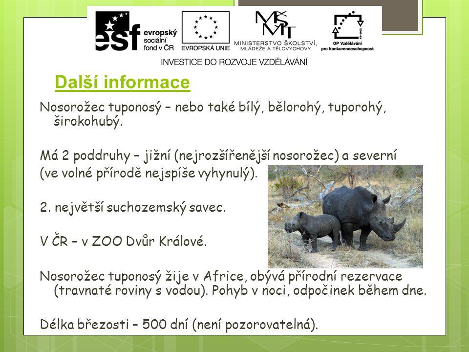 Další informace Nosorožec tuponosý – nebo také bílý, bělorohý, tuporohý, širokohubý.
