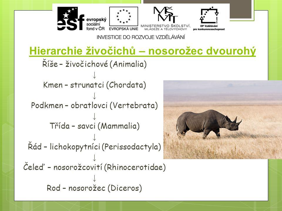 Hierarchie živočichů – nosorožec dvourohý Říše – živočichové (Animalia) ↓ Kmen – strunatci (Chordata) ↓ Podkmen – obratlovci (Vertebrata) ↓ Třída – savci (Mammalia) ↓ Řád – lichokopytníci (Perissodactyla) ↓ Čeleď – nosorožcovití (Rhinocerotidae) ↓ Rod – nosorožec (Diceros)