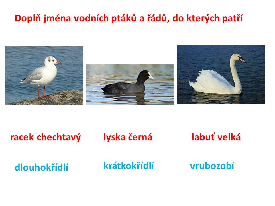 Doplň jména vodních ptáků a řádů, do kterých patří racek chechtavý lyska černá labuť velká dlouhokřídlí krátkokřídlívrubozobí