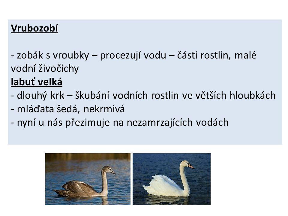 Použité zdroje http://microsoft.com http://cs.wikipedia.org/wiki/Soubor:Bl%C3%A4sshuhn_Fulica_atra_Richard _Bartz.jpg http://cs.wikipedia.org/wiki/Soubor:CygneVaires.jpg http://cs.wikipedia.org/wiki/Soubor:CygnusOlorJuvenile.jpg http://cs.wikipedia.org/wiki/Soubor:Mallard_080508.jpg http://cs.wikipedia.org/wiki/Soubor:Kaczka_krzyzowka_samica.jpg http://cs.wikipedia.org/wiki/Soubor:Phalacrocorax_carbo1.jpg http://cs.wikipedia.org/wiki/Soubor:Black-headed_Gull- Mindaugas_Urbonas-8.jpg