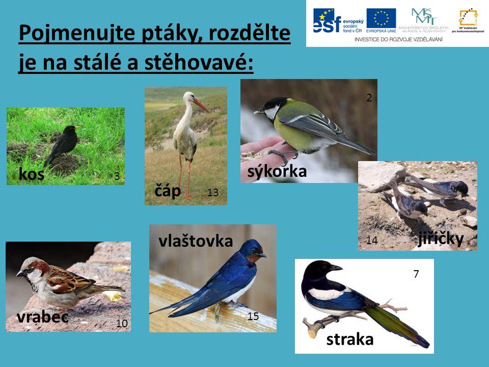 Pojmenujte ptáky, rozdělte je na stálé a stěhovavé: 2 3 10 7 13 15 14 kos čáp sýkorka jiřičky vrabec vlaštovka straka