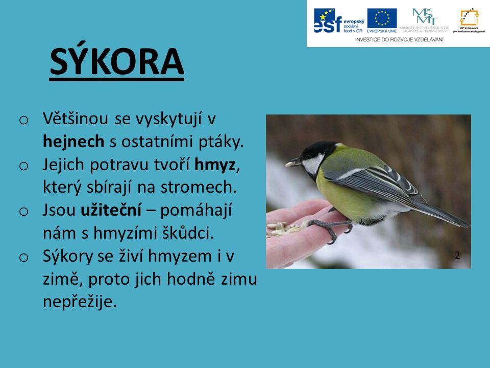 SÝKORA o Většinou se vyskytují v hejnech s ostatními ptáky. o Jejich potravu tvoří hmyz, který sbírají na stromech. o Jsou užiteční – pomáhají nám s h
