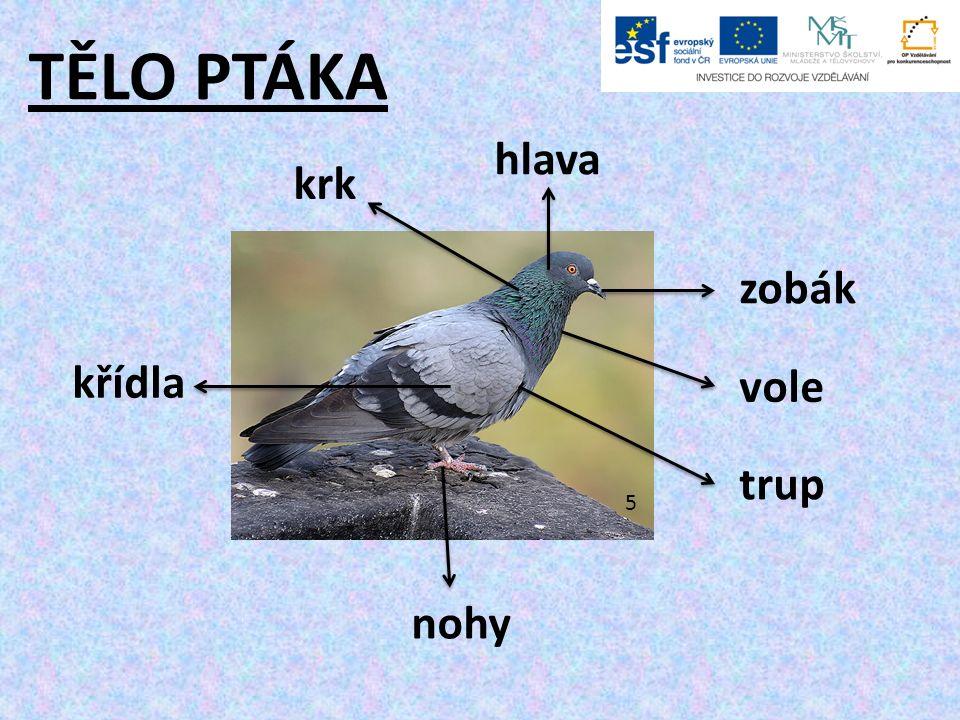 TĚLO PTÁKA 5 hlava zobák vole trup krk křídla nohy