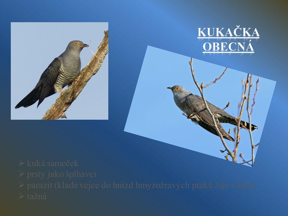kkuká sameček pprsty jako šplhavci pparazit (klade vejce do hnízd hmyzožravých ptáků žije v lese) ttažná