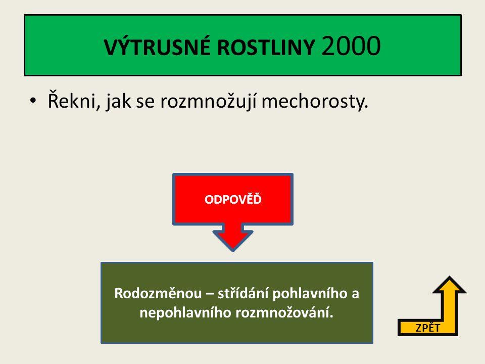 VÝTRUSNÉ ROSTLINY 1000 Jmenuj tři skupiny výtrusných rostlin.