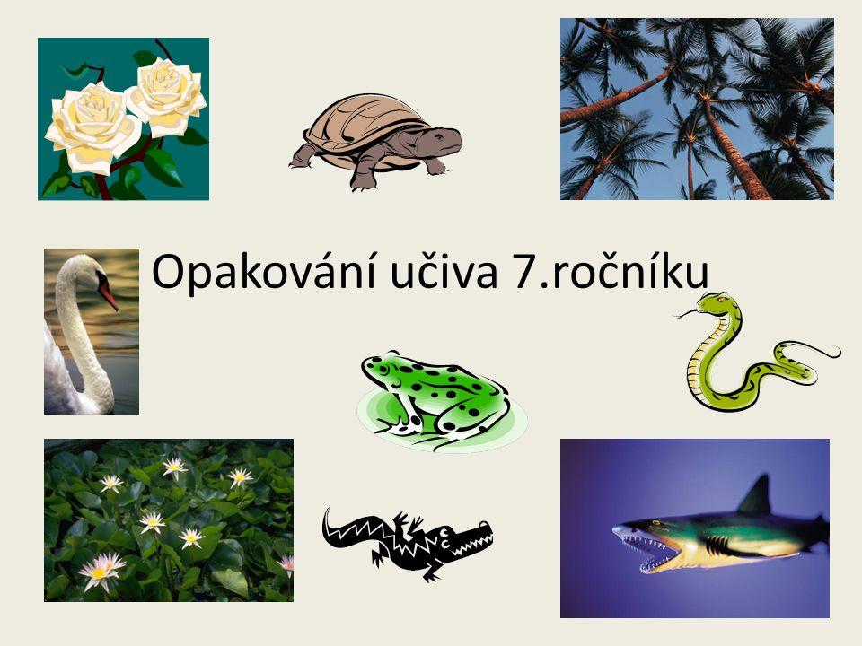 OPAKOVÁNÍ UČIVA 7. ROČNÍKU Autor: Mgr.