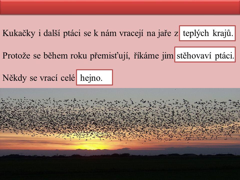 Kukačky i další ptáci se k nám vracejí na jaře z teplých krajů. Protože se během roku přemisťují, říkáme jim stěhovaví ptáci. Někdy se vrací celé hejn