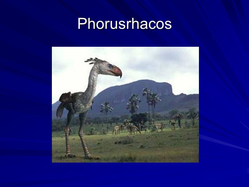 Phorusrhacos