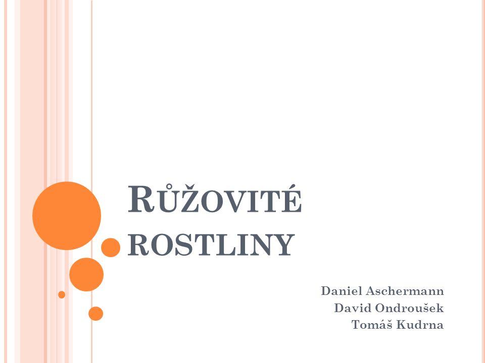 R ŮŽOVITÉ ROSTLINY Daniel Aschermann David Ondroušek Tomáš Kudrna