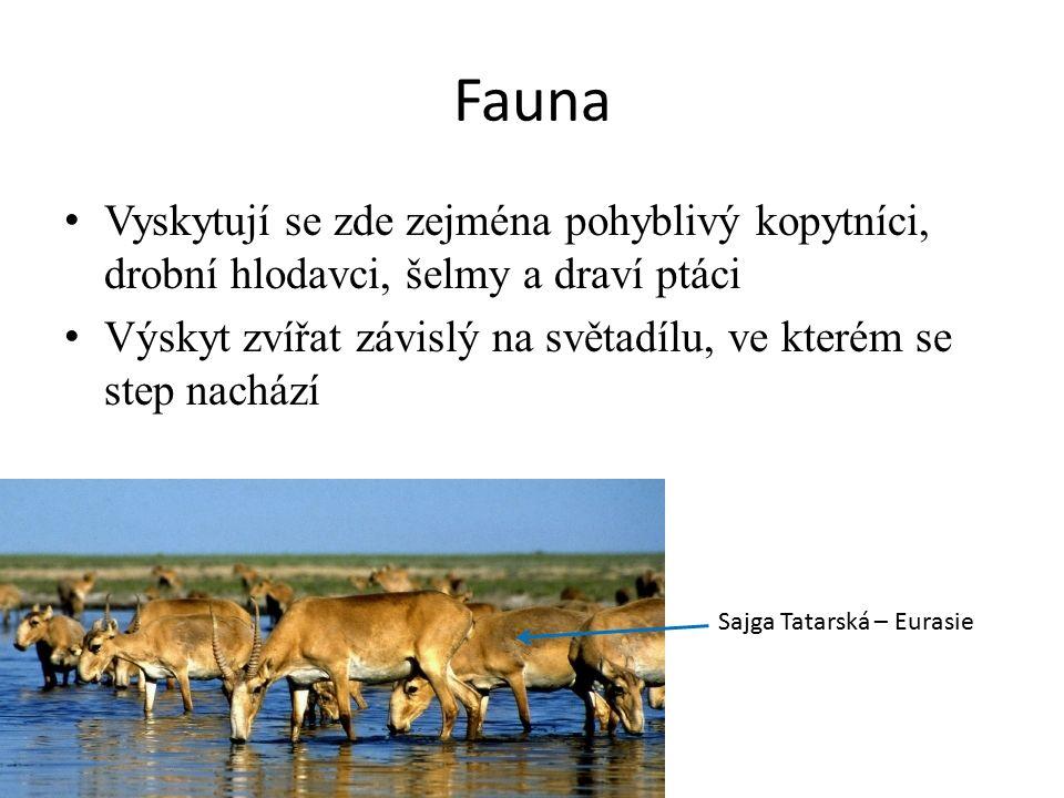 Fauna Vyskytují se zde zejména pohyblivý kopytníci, drobní hlodavci, šelmy a draví ptáci Výskyt zvířat závislý na světadílu, ve kterém se step nachází