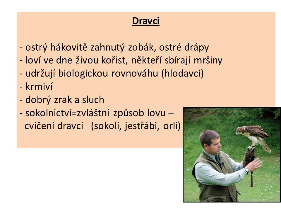 Dravci - ostrý hákovitě zahnutý zobák, ostré drápy - loví ve dne živou kořist, někteří sbírají mršiny - udržují biologickou rovnováhu (hlodavci) - krmiví - dobrý zrak a sluch - sokolnictví=zvláštní způsob lovu – cvičení dravci (sokoli, jestřábi, orli)