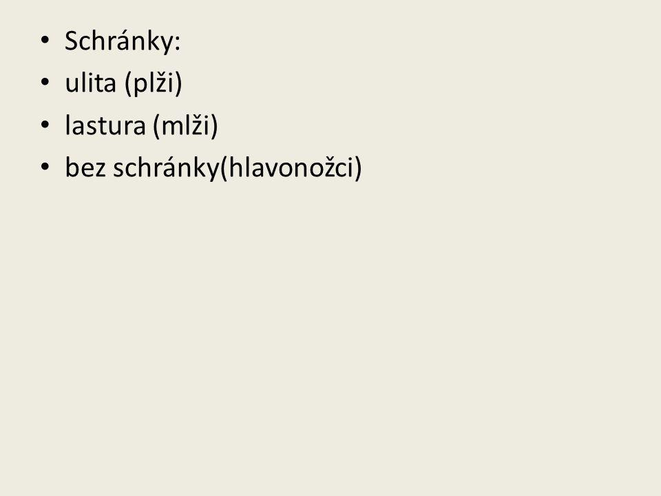 Schránky: ulita (plži) lastura (mlži) bez schránky(hlavonožci)