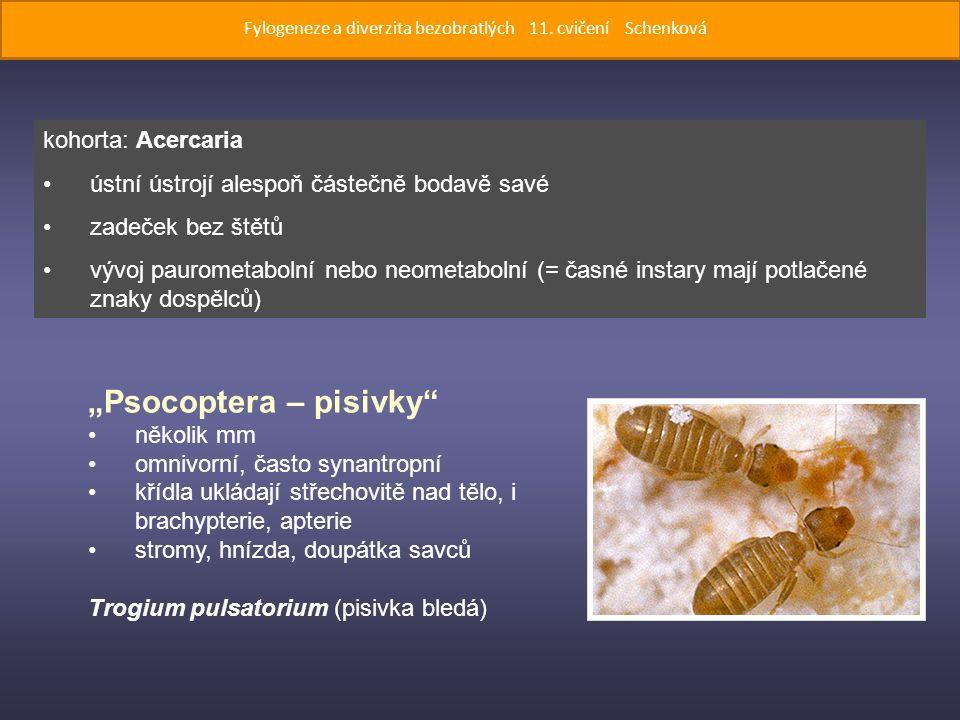 """""""Psocoptera – pisivky několik mm omnivorní, často synantropní křídla ukládají střechovitě nad tělo, i brachypterie, apterie stromy, hnízda, doupátka savců Trogium pulsatorium (pisivka bledá) kohorta: Acercaria ústní ústrojí alespoň částečně bodavě savé zadeček bez štětů vývoj paurometabolní nebo neometabolní (= časné instary mají potlačené znaky dospělců) Fylogeneze a diverzita bezobratlých 11."""