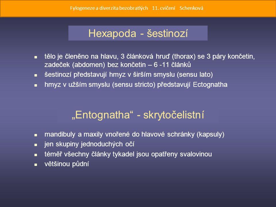 """tělo je členěno na hlavu, 3 článková hruď (thorax) se 3 páry končetin, zadeček (abdomen) bez končetin – 6 -11 článků šestinozí představují hmyz v širším smyslu (sensu lato) hmyz v užším smyslu (sensu stricto) představují Ectognatha mandibuly a maxily vnořené do hlavové schránky (kapsuly) jen skupiny jednoduchých očí téměř všechny články tykadel jsou opatřeny svalovinou většinou půdní Hexapoda - šestinozí """"Entognatha - skrytočelistní Fylogeneze a diverzita bezobratlých 11."""