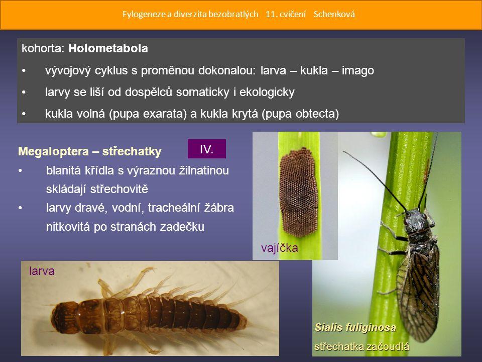 Sialis fuliginosa střechatka začoudlá Megaloptera – střechatky blanitá křídla s výraznou žilnatinou skládají střechovitě larvy dravé, vodní, tracheální žábra nitkovitá po stranách zadečku kohorta: Holometabola vývojový cyklus s proměnou dokonalou: larva – kukla – imago larvy se liší od dospělců somaticky i ekologicky kukla volná (pupa exarata) a kukla krytá (pupa obtecta) larva vajíčka IV.