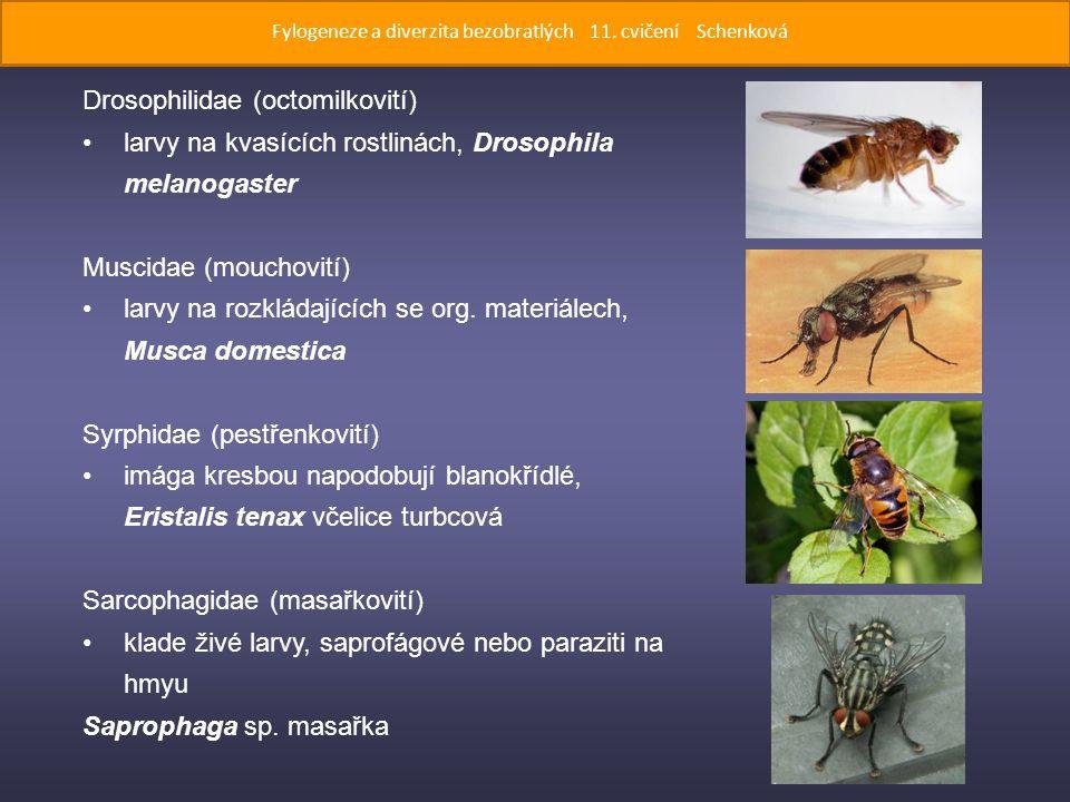 Drosophilidae (octomilkovití) larvy na kvasících rostlinách, Drosophila melanogaster Muscidae (mouchovití) larvy na rozkládajících se org.