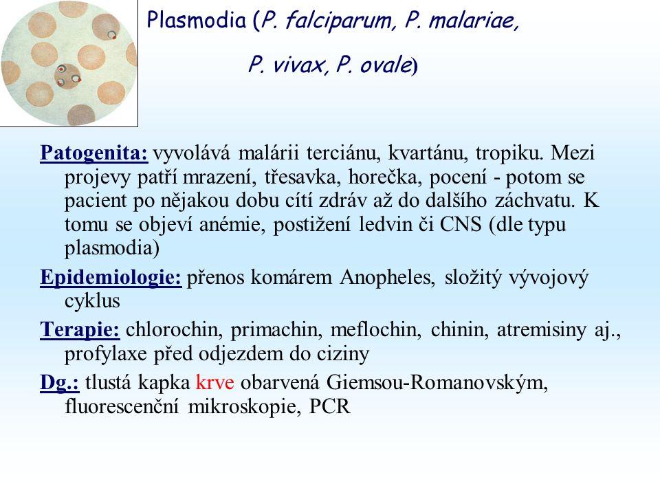Plasmodia (P. falciparum, P. malariae, P. vivax, P.