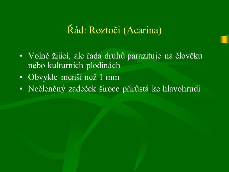 Řád: Roztoči (Acarina) Volně žijící, ale řada druhů parazituje na člověku nebo kulturních plodinách Obvykle menší než 1 mm Nečleněný zadeček široce přirůstá ke hlavohrudi