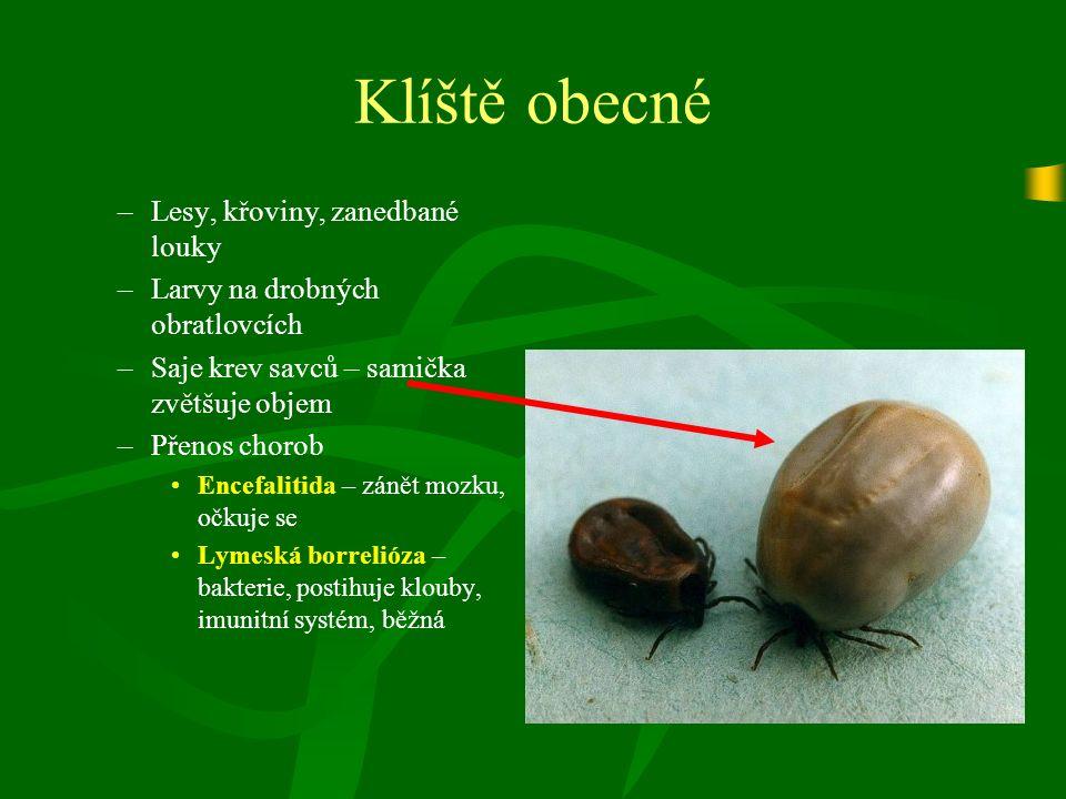 Klíště obecné –Lesy, křoviny, zanedbané louky –Larvy na drobných obratlovcích –Saje krev savců – samička zvětšuje objem –Přenos chorob Encefalitida – zánět mozku, očkuje se Lymeská borrelióza – bakterie, postihuje klouby, imunitní systém, běžná