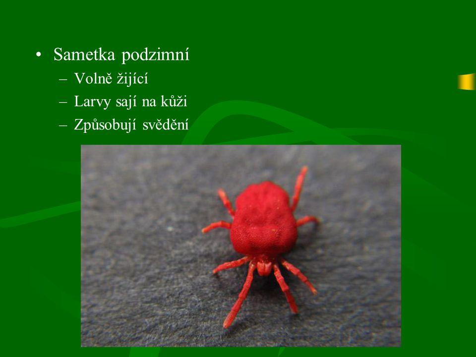Sametka podzimní –Volně žijící –Larvy sají na kůži –Způsobují svědění