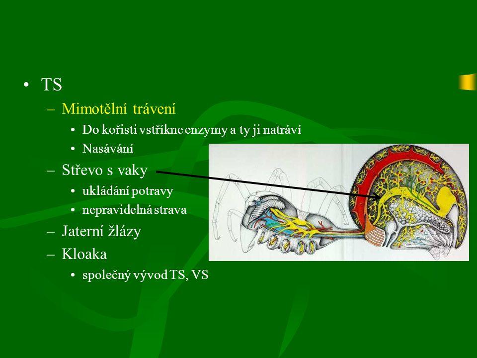 TS –Mimotělní trávení Do kořisti vstříkne enzymy a ty ji natráví Nasávání –Střevo s vaky ukládání potravy nepravidelná strava –Jaterní žlázy –Kloaka společný vývod TS, VS