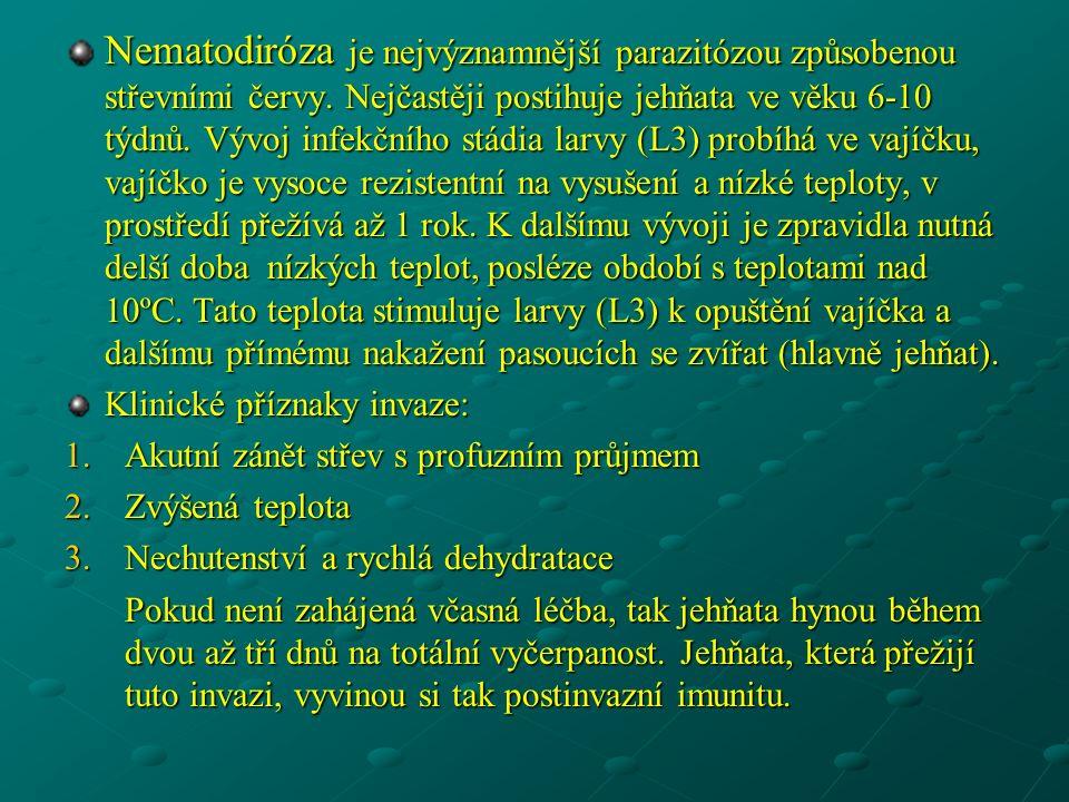 Nematodiróza je nejvýznamnější parazitózou způsobenou střevními červy.