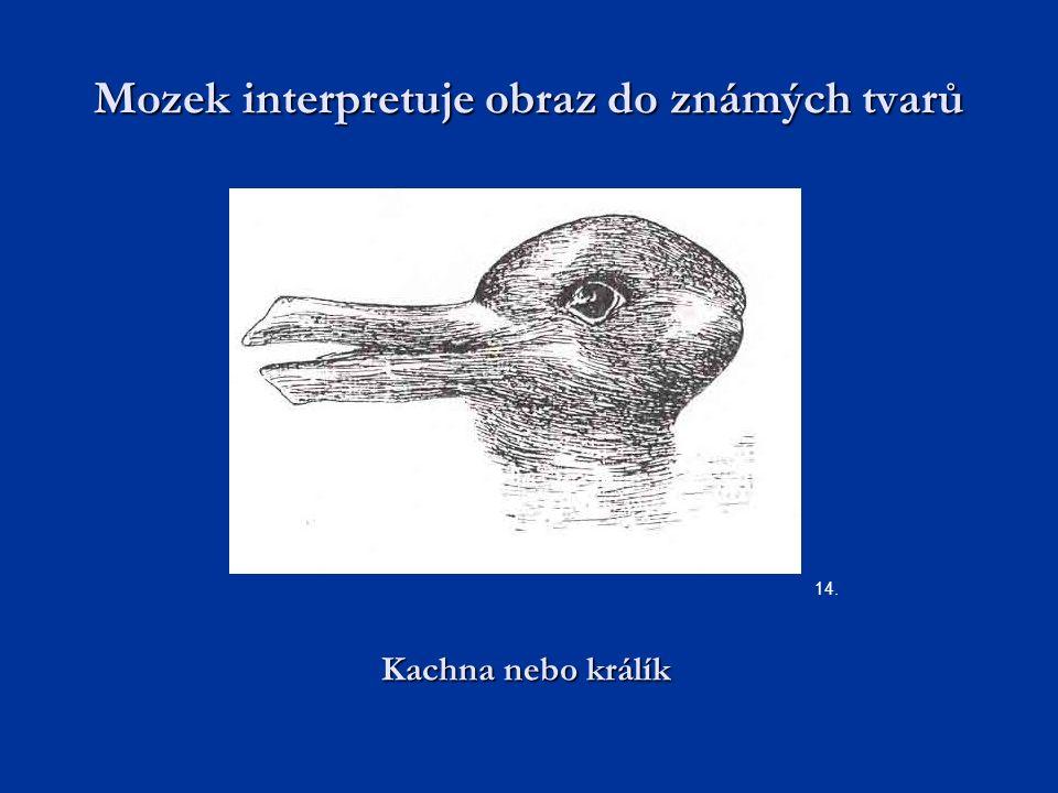 Mozek interpretuje obraz do známých tvarů 14. Kachna nebo králík