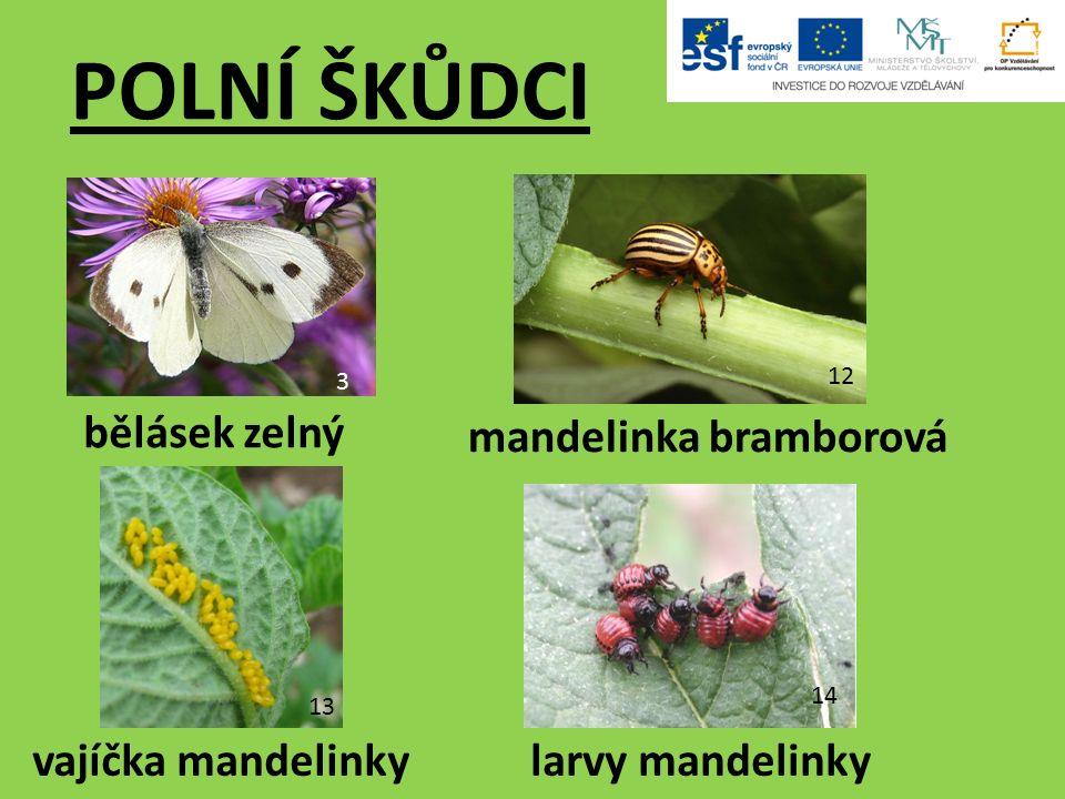 3 bělásek zelný POLNÍ ŠKŮDCI 12 larvy mandelinkyvajíčka mandelinky mandelinka bramborová 13 14