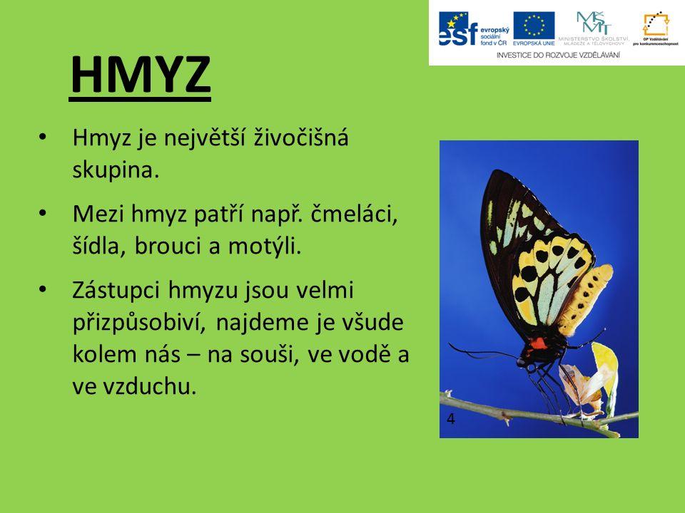 HMYZ Hmyz je největší živočišná skupina. Mezi hmyz patří např.