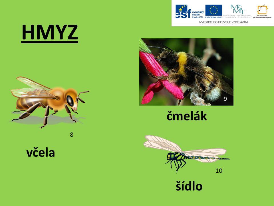 HMYZ včela čmelák šídlo 8 9 10