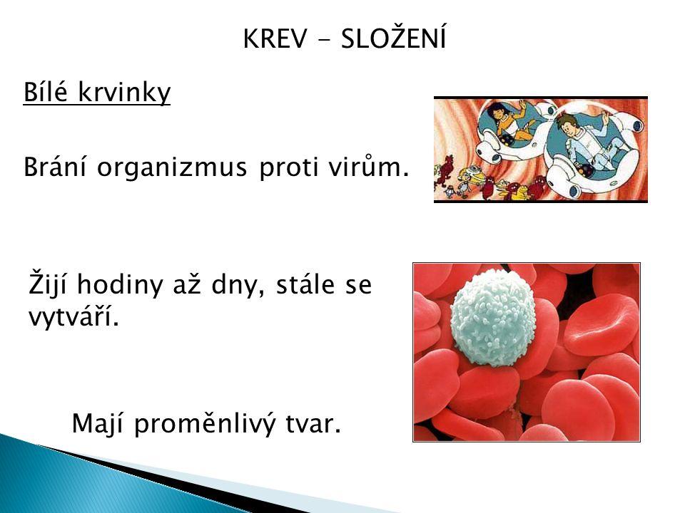 KREV - SLOŽENÍ Bílé krvinky Brání organizmus proti virům.