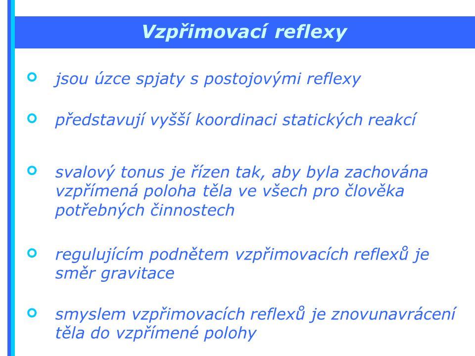 Vzpřimovací reflexy jsou úzce spjaty s postojovými reflexy představují vyšší koordinaci statických reakcí svalový tonus je řízen tak, aby byla zachována vzpřímená poloha těla ve všech pro člověka potřebných činnostech regulujícím podnětem vzpřimovacích reflexů je směr gravitace smyslem vzpřimovacích reflexů je znovunavrácení těla do vzpřímené polohy