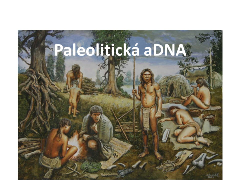 Mitochondriální DNA Nukleární DNA Y Porovnání současné DNA (Paleogenetika, National Geographic…)