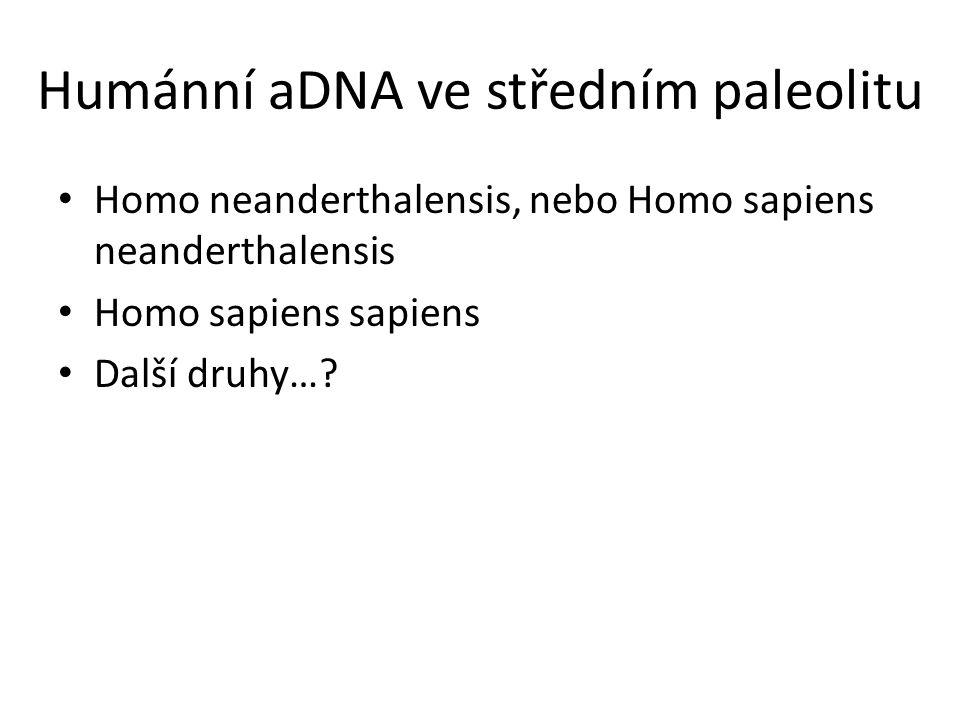 Humánní aDNA ve středním paleolitu Homo neanderthalensis, nebo Homo sapiens neanderthalensis Homo sapiens sapiens Další druhy…