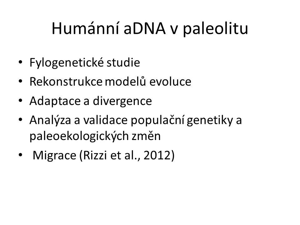 Humánní aDNA v paleolitu Fylogenetické studie Rekonstrukce modelů evoluce Adaptace a divergence Analýza a validace populační genetiky a paleoekologických změn Migrace (Rizzi et al., 2012)