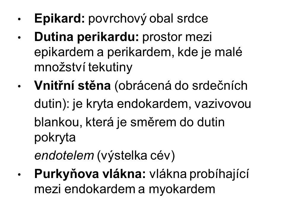Epikard: povrchový obal srdce Dutina perikardu: prostor mezi epikardem a perikardem, kde je malé množství tekutiny Vnitřní stěna (obrácená do srdečníc