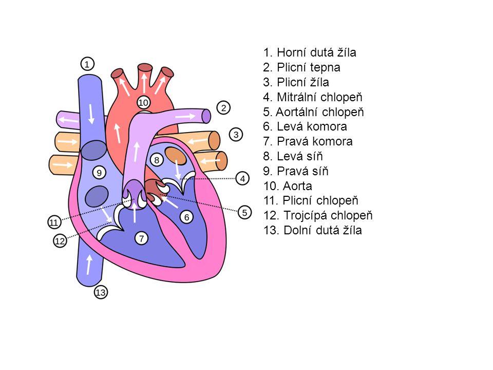 1. Horní dutá žíla 2. Plicní tepna 3. Plicní žíla 4. Mitrální chlopeň 5. Aortální chlopeň 6. Levá komora 7. Pravá komora 8. Levá síň 9. Pravá síň 10.