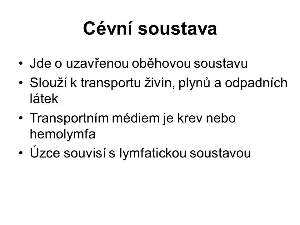 Cévní soustava Jde o uzavřenou oběhovou soustavu Slouží k transportu živin, plynů a odpadních látek Transportním médiem je krev nebo hemolymfa Úzce souvisí s lymfatickou soustavou